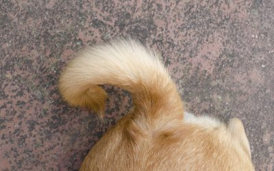 What is a dog's tail wag really saying?